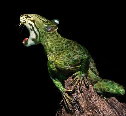 Leopliz – leopard/lizard